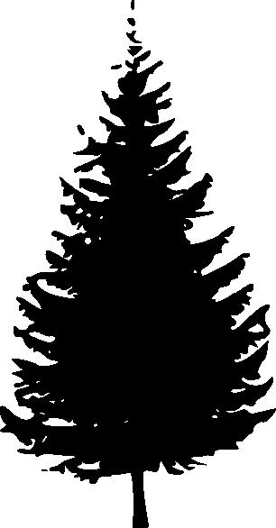 fir%20clipart