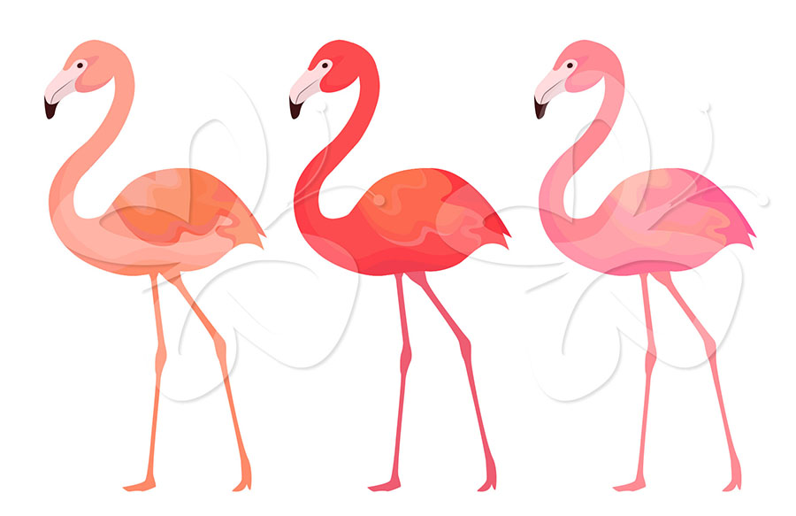 Go Back > Gallery For > Flamingos Clipart