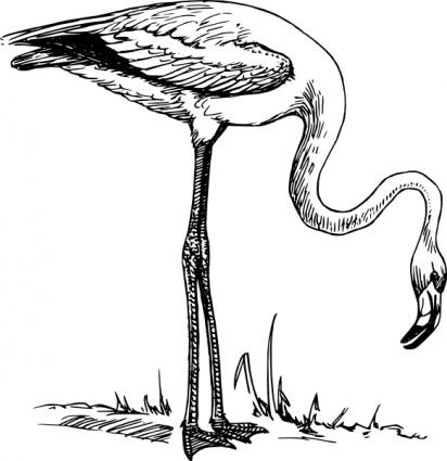 flamingo clipart black and white clipart panda free