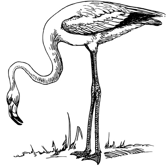 Cute flamingo coloring pages