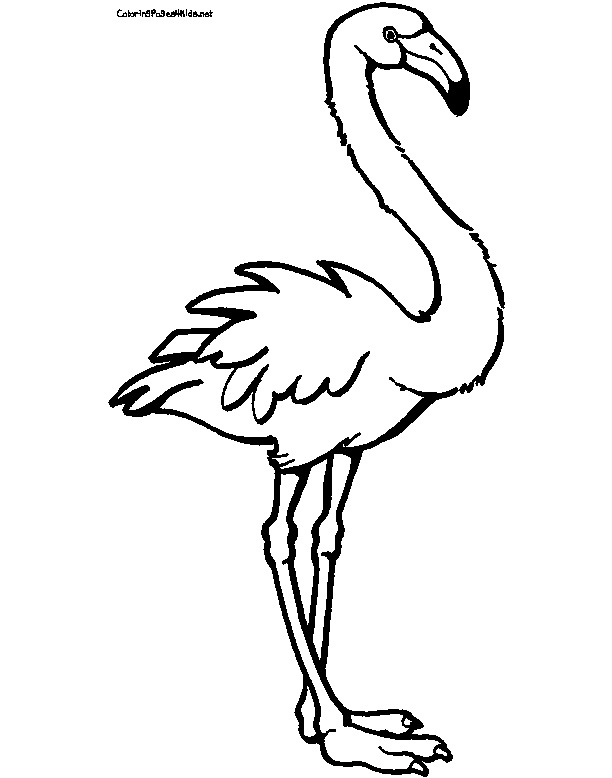 Flamingo Coloring Pages Clipart Panda Free Clipart Images
