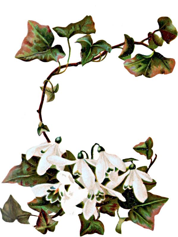 Floral Clip Art Borders Free | Clipart Panda - Free Clipart Images