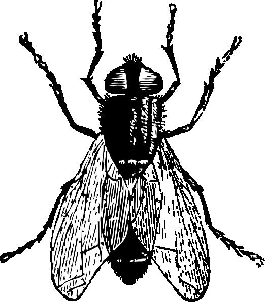 Fly Clip Art