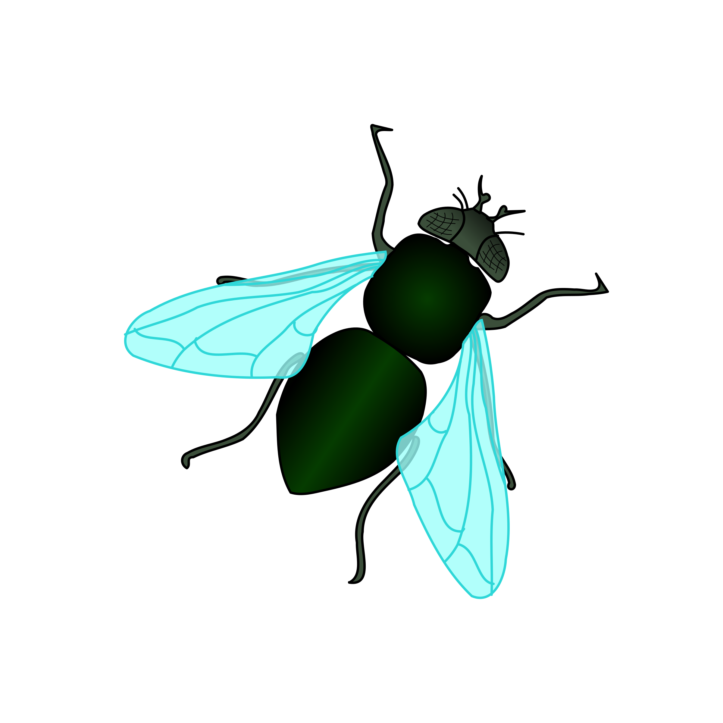 Fly Clipart | Clipart Panda - Free Clipart Images