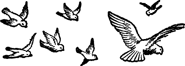 fly clipart black and white clipart panda free clipart images rh clipartpanda com flies clipart black and white butterfly clipart black and white