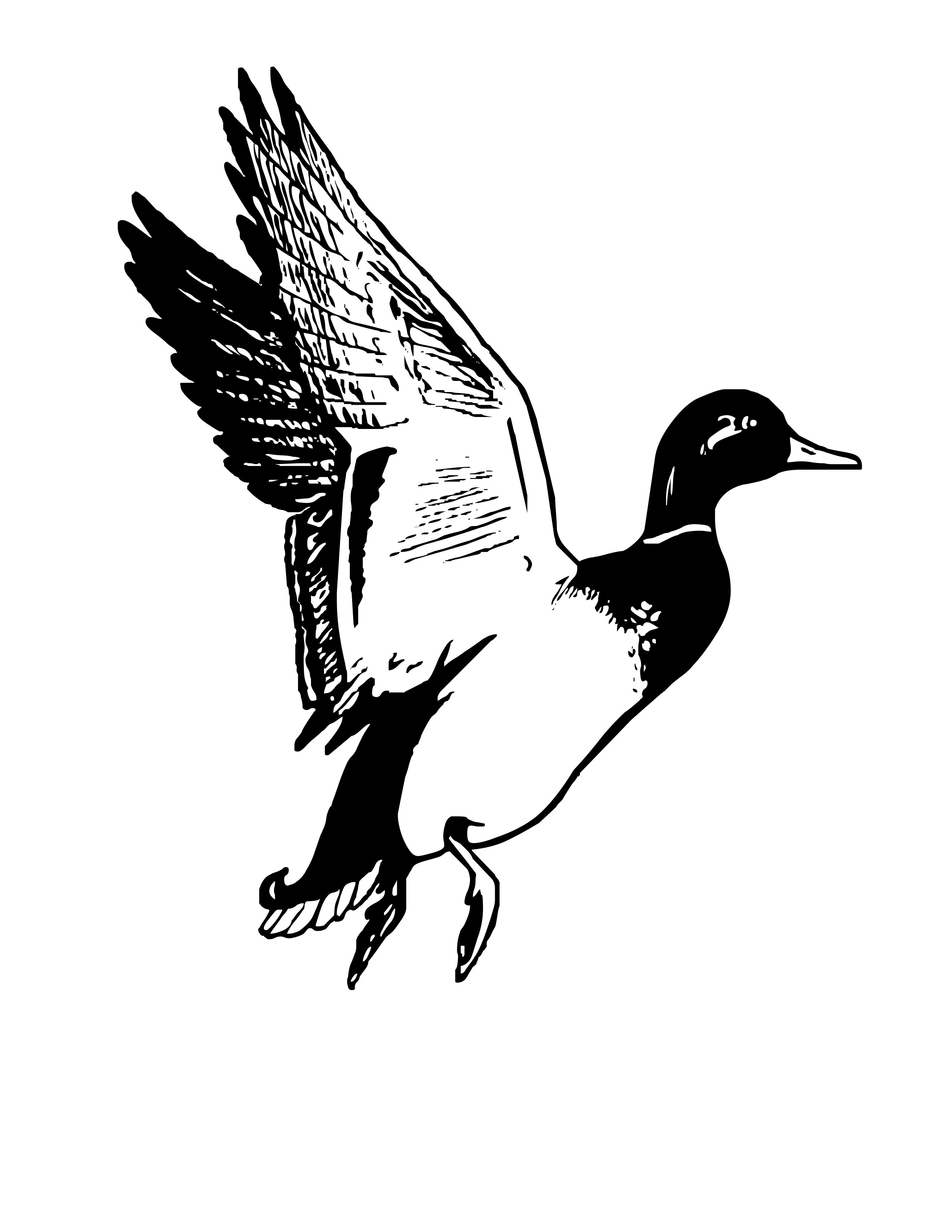 Flying mallard duck clipart clipart panda free clipart for Duck hunting coloring pages