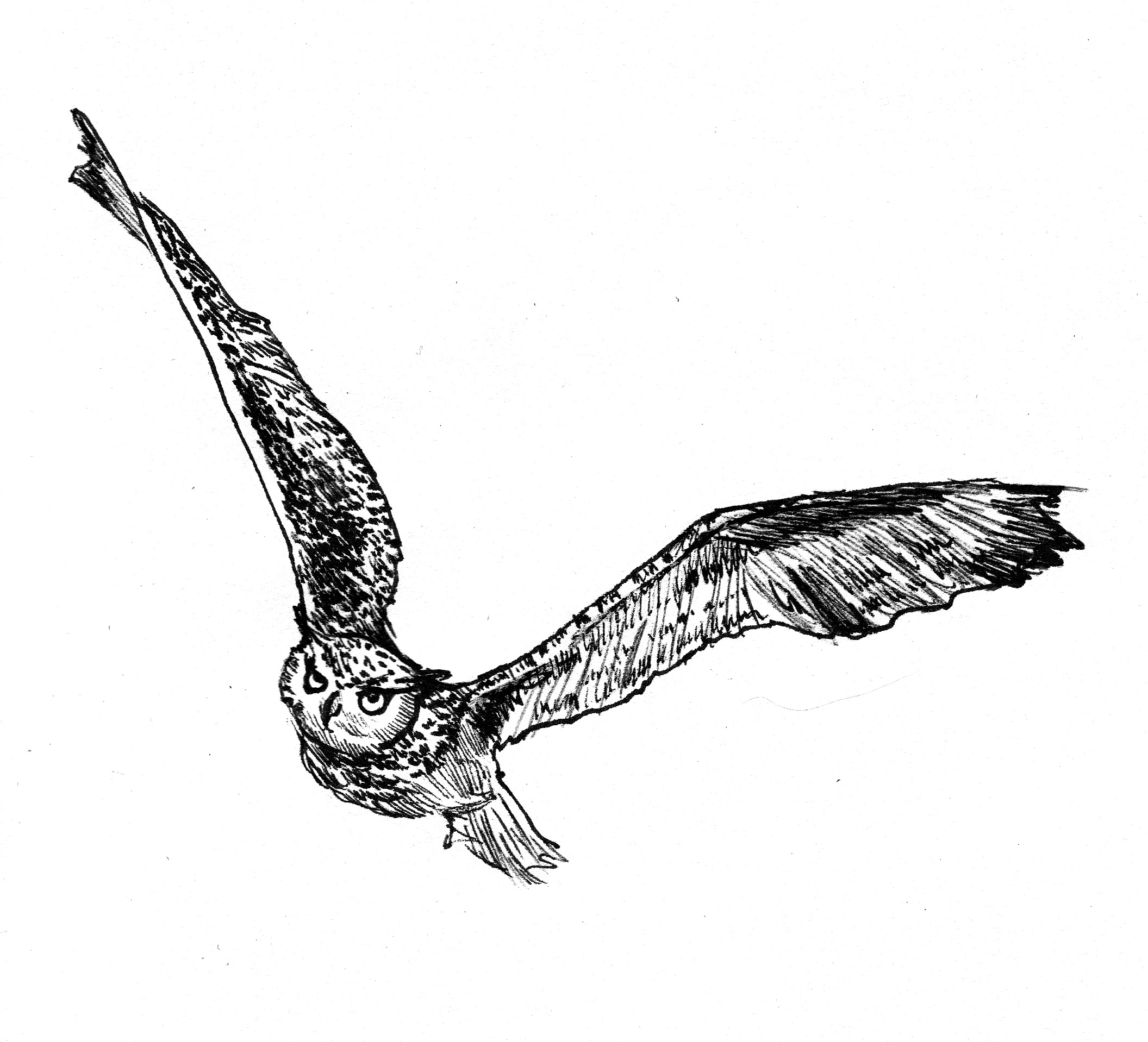 flying-owl-drawing-owl-sketches 4-corrected jpgFlying Horned Owl Tattoo