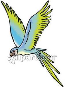 cute parrot png photos - cute flying birds clipart PNG image with  transparent background   TOPpng