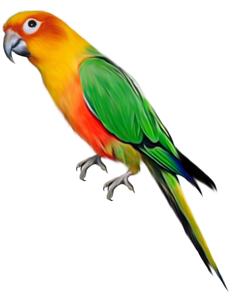 Flying Parrot Clipart ...