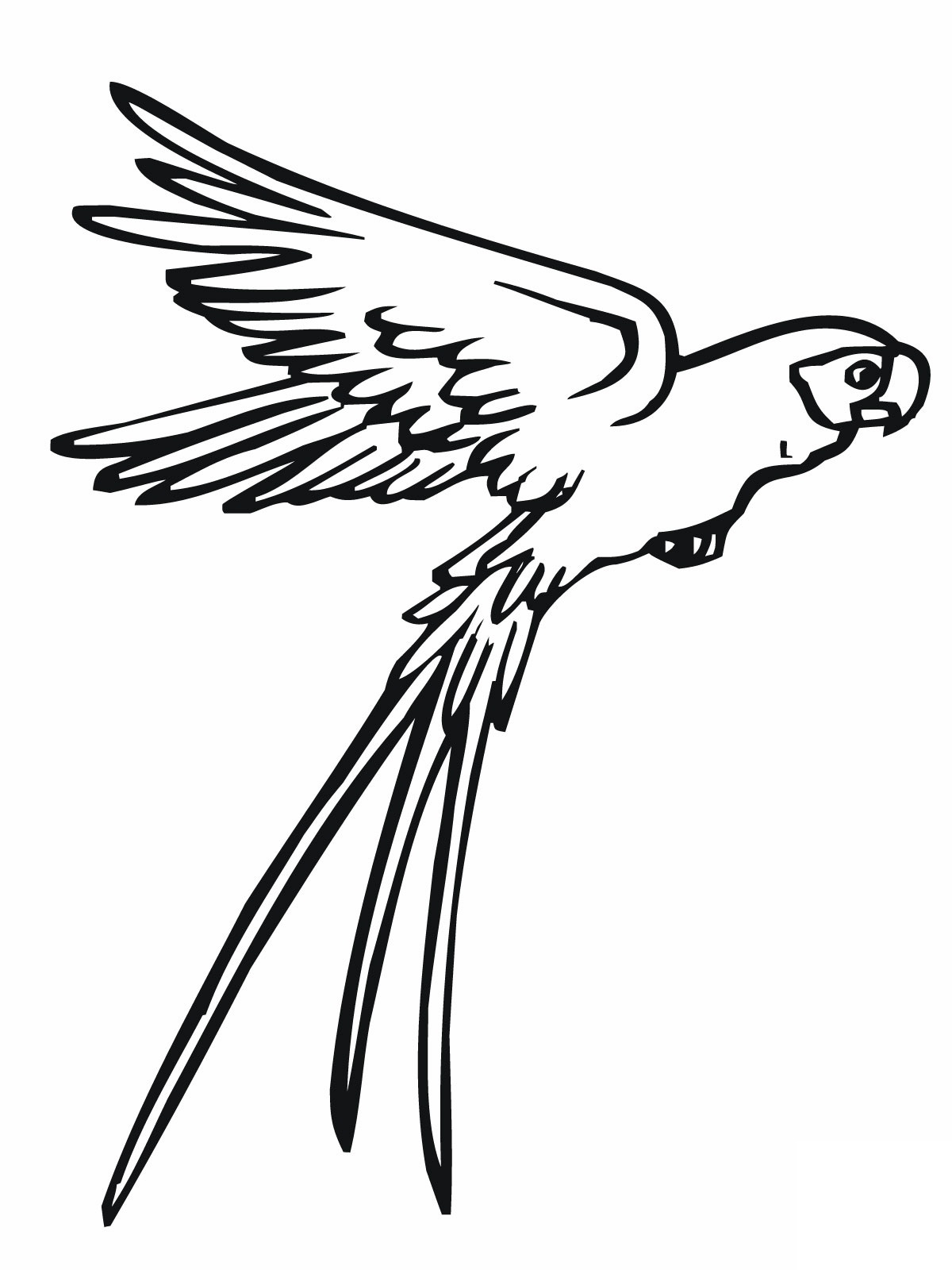 flying-parrot-drawing-Flying-Parrot-Coloring-Page.jpg