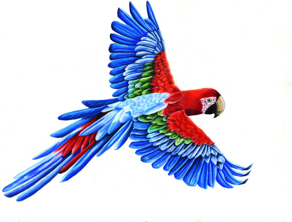 Flying Parrot Drawing | Clipart Panda - Free Clipart Images