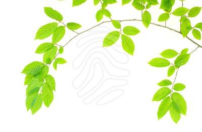 free leaf border clip art