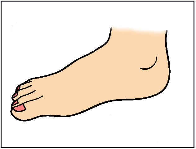 Body Parts Feet Clipart Free
