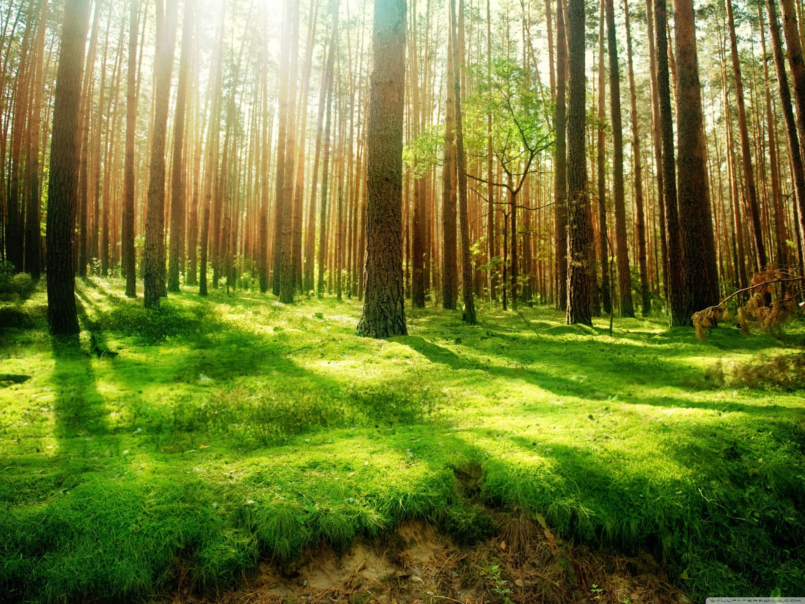 Лес россии обои на рабочий стол