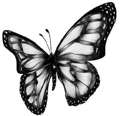 Free Butterfly Clipart Black And White | Clipart Panda - Free ...