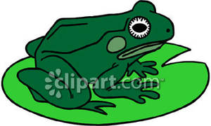 frog on lily pad clipart clipart panda free clipart images rh clipartpanda com frog on a lily pad clipart frog on a lily pad clipart