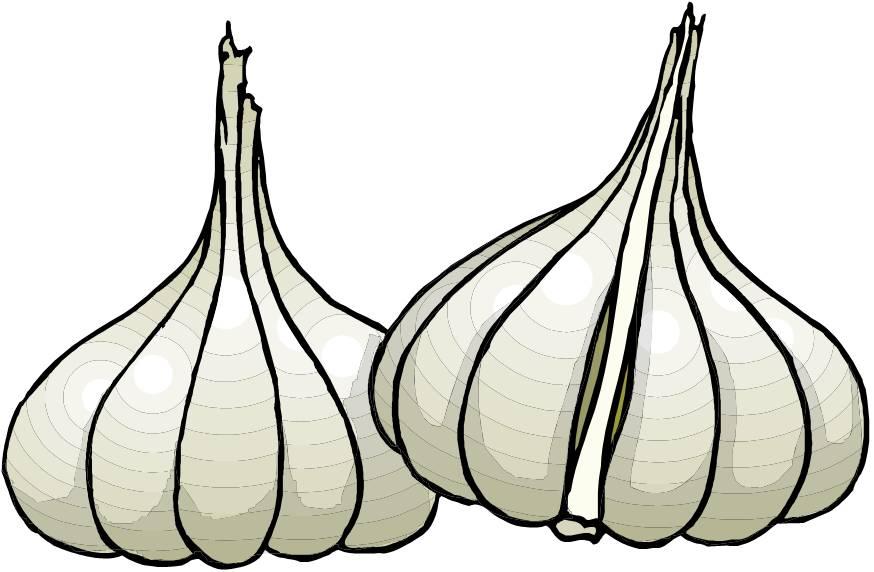 Garlic Clip Art...
