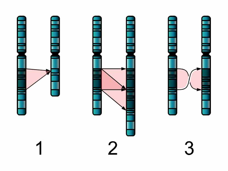 chromo single men Do men and women receive different ancestry information from 23andme  women inherited two copies of the x chromosome - one from each parent - while men inherited one x chromosome from.