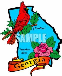 Similiar Georgia State Bird And Flower Art Keywords