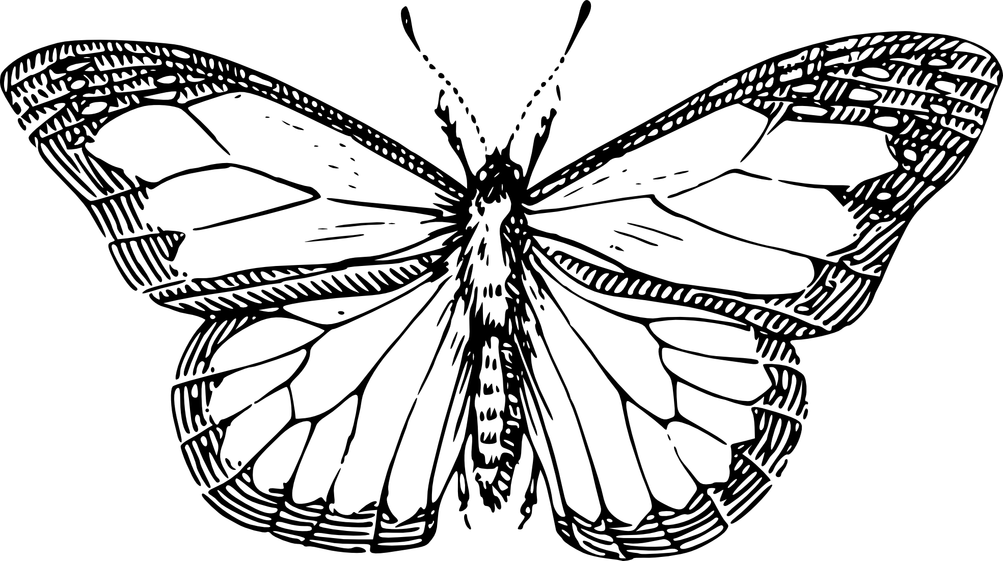 Vector Drawing Lines Game : Butterfly net drawing clipart panda free images
