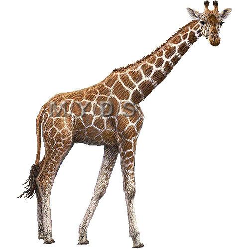 giraffe%20clip%20art
