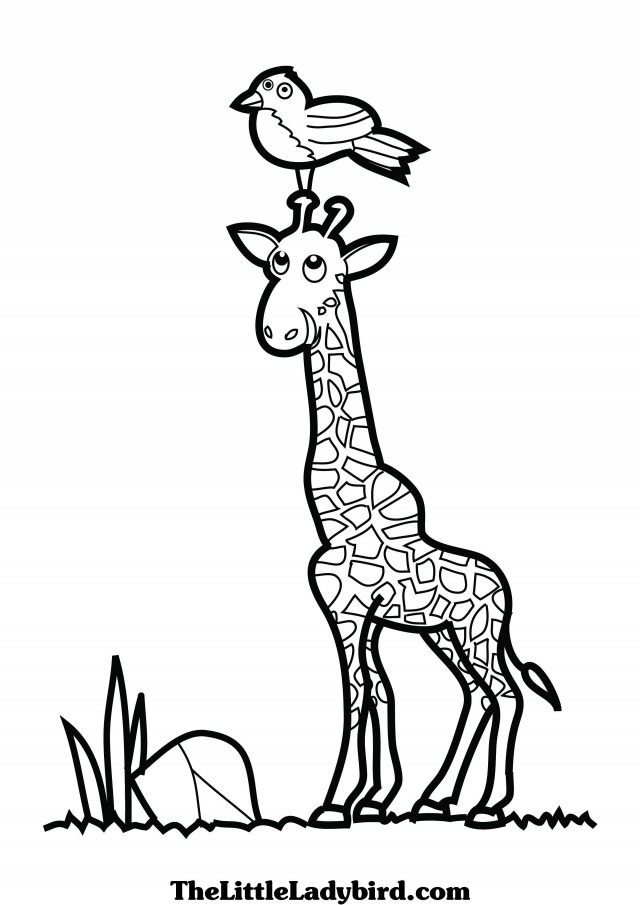 Baby Giraffe Coloring Pages Clipart Panda