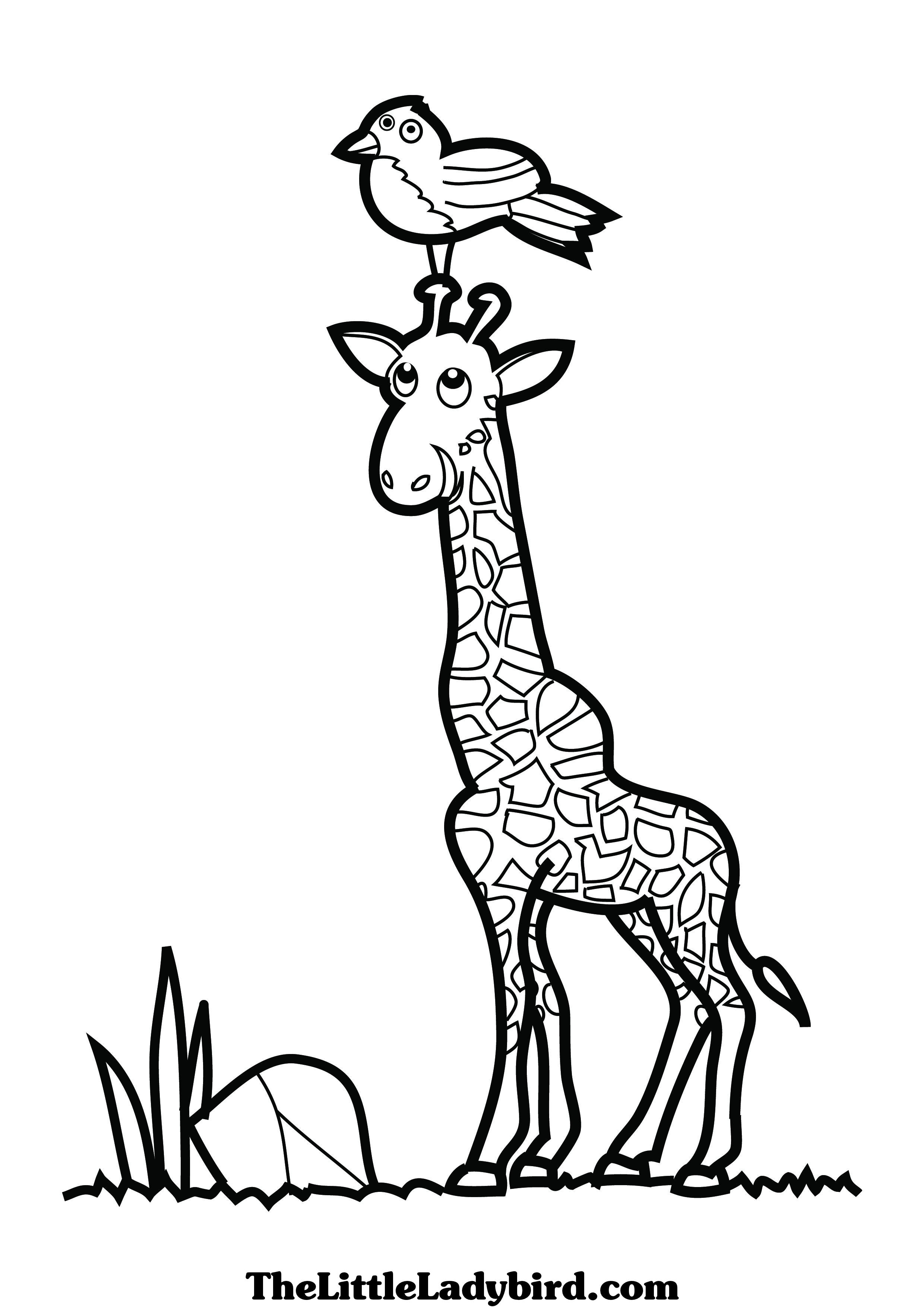 Free coloring page giraffe - Giraffe 20head 20coloring 20pages