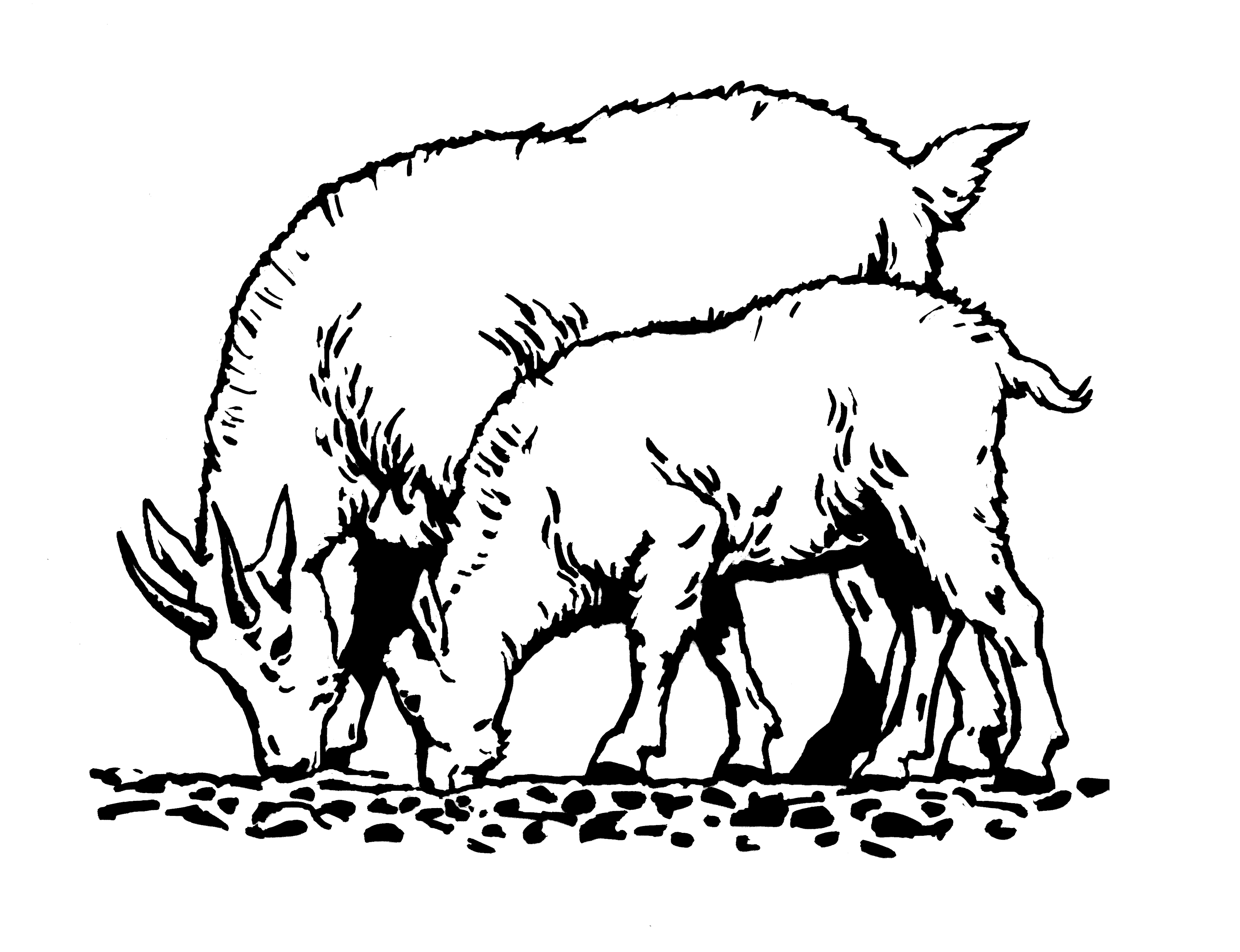 Goat Clipart Black And White   Clipart Panda - Free ...