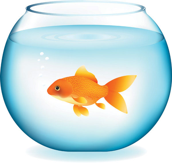Gold fish in a bowl clip art clipart panda free for Fish in a bowl