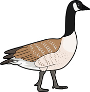 goose clip art free clipart panda free clipart images rh clipartpanda com geese clipart black and white geese clipart black and white