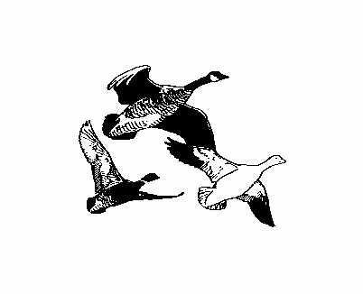 Goose Clip Art Free | Clipart Panda - Free Clipart Images