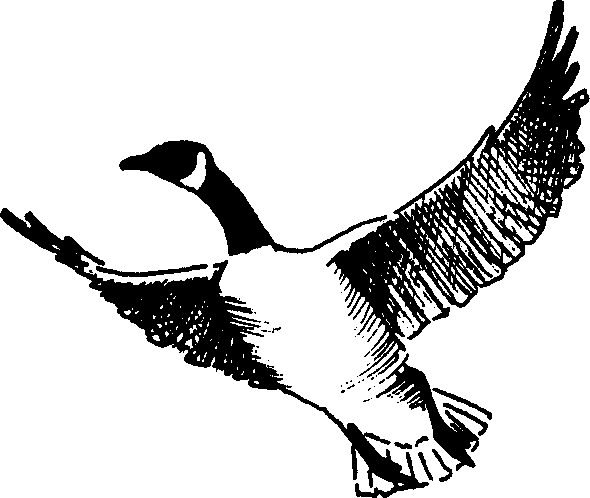 goose clip art free clipart panda free clipart images rh clipartpanda com clipart geese flying clipart geese flying
