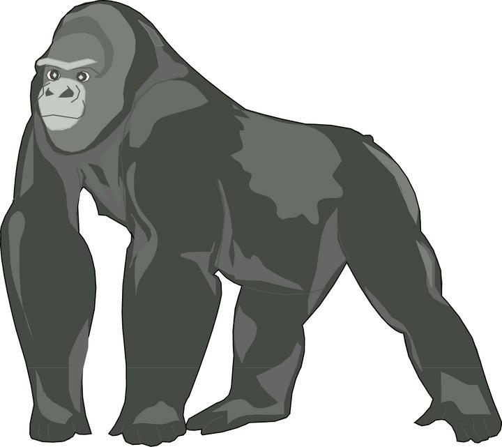gorilla clip art free clipart panda free clipart images rh clipartpanda com gorilla clipart free gorilla clipart sillouttee
