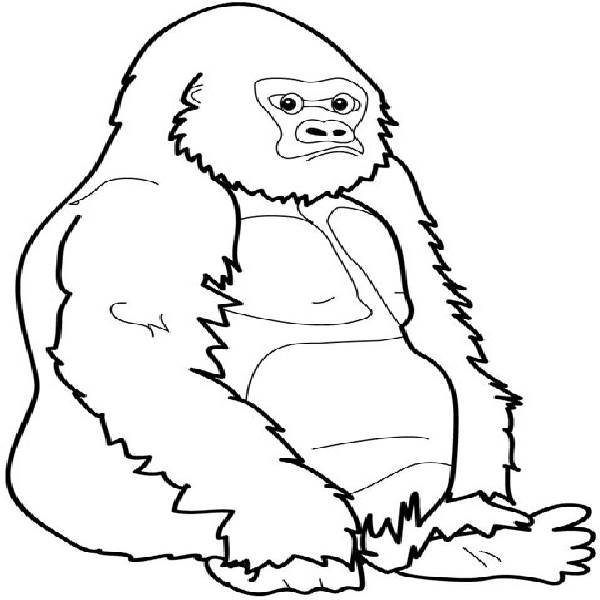 Baby Mountain Gorilla Coloring Pages Pictures To Pin On