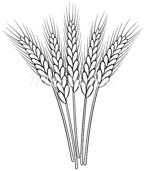 wheat grain clipart clipart panda free clipart images rh clipartpanda com clip art of whatever clip art of wheat png