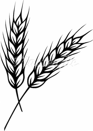 wheat coloring pages - photo#11