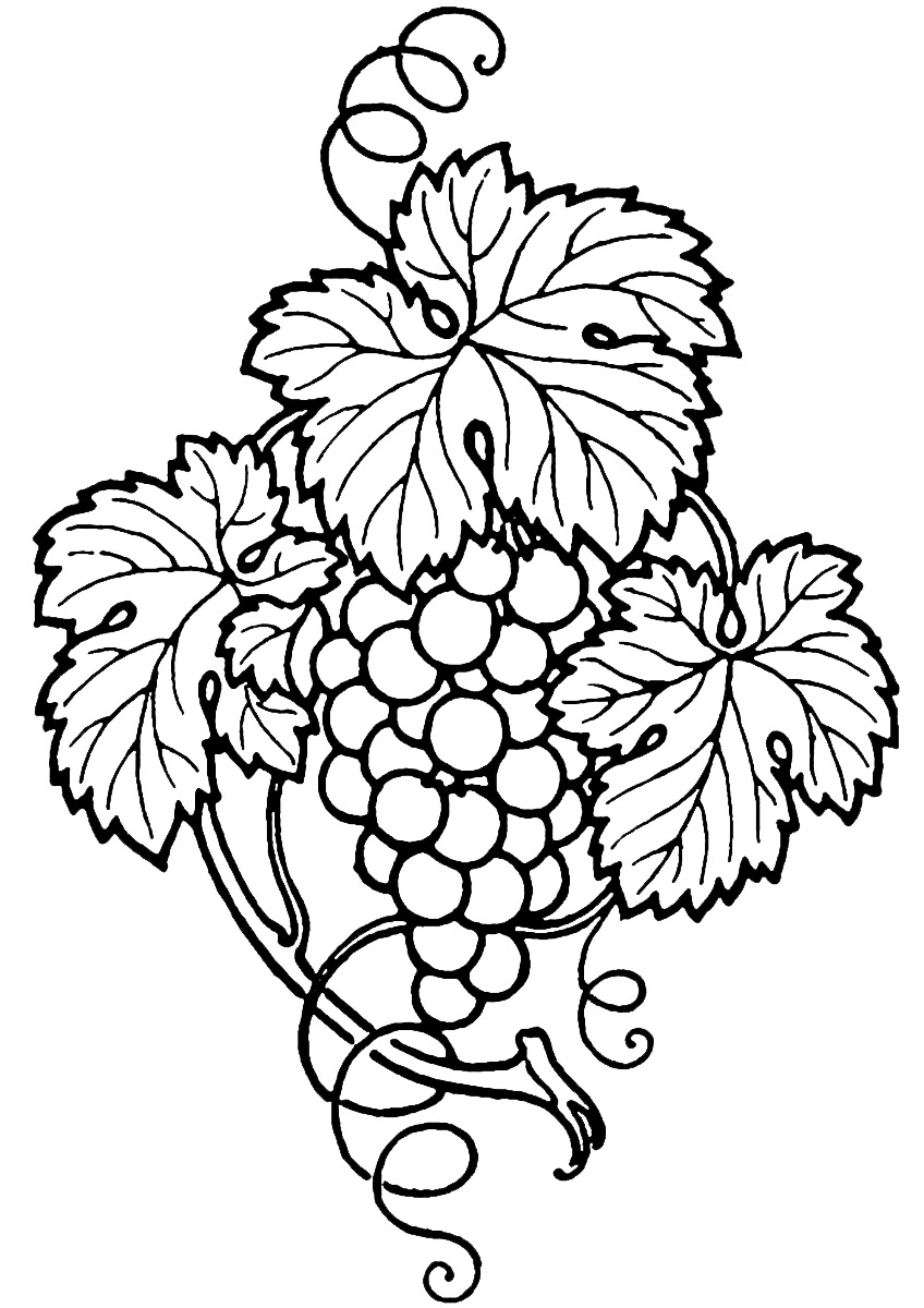 grapes%20and%20wine%20clipart