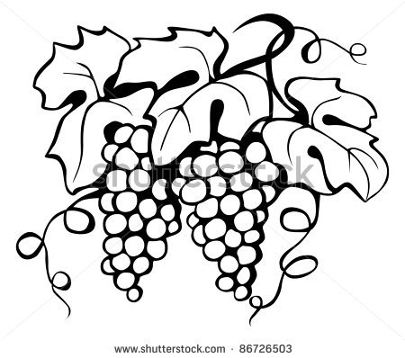 Grapes Drawing Clipart Panda Free Clipart Images