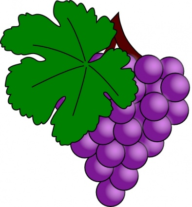 grapes vine clipart clipart panda free clipart images rh clipartpanda com clip art grapes and vines clip art grapefruit drawings free