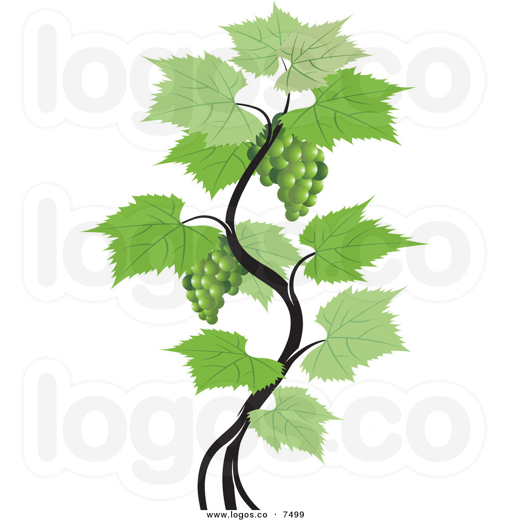 grapevine clipart clipart panda free clipart images rh clipartpanda com grapevine clip art free grapevine clipart