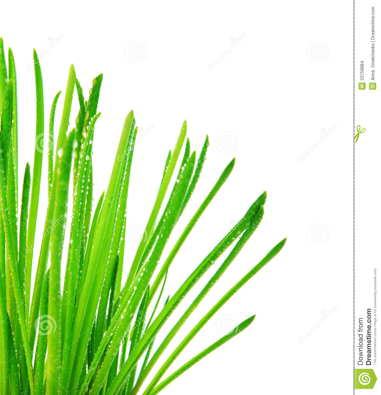 Grass border no background clipart panda free clipart for Best grasses for borders