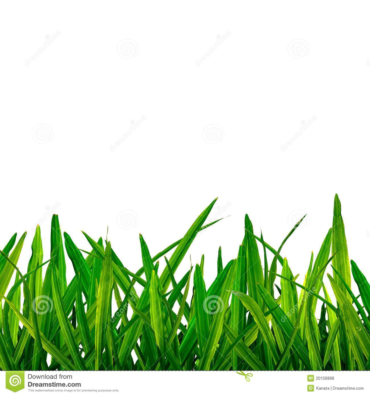 grass background clipart - photo #12