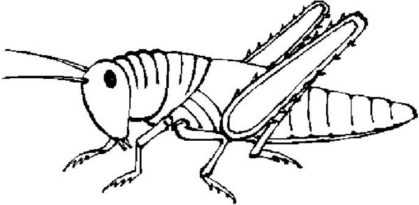 Grasshopper Coloring Page Clipart Panda Free Clipart Images