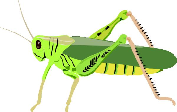 grasshopper clipart images clipart panda free clipart images rh clipartpanda com grasshopper clip art free grasshopper clipart free