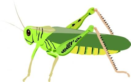 grasshopper clipart images clipart panda free clipart images rh clipartpanda com grasshopper clip art free grasshopper clipart images