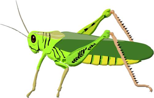 grasshopper-clipart-grass-clip-art-189.jpg