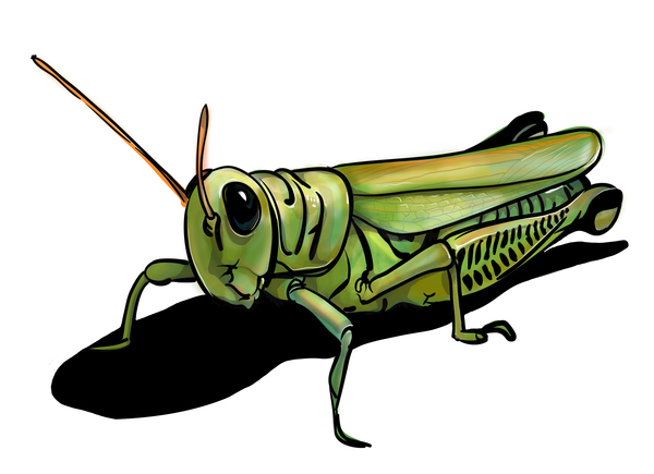 how to use grasshopper on mac