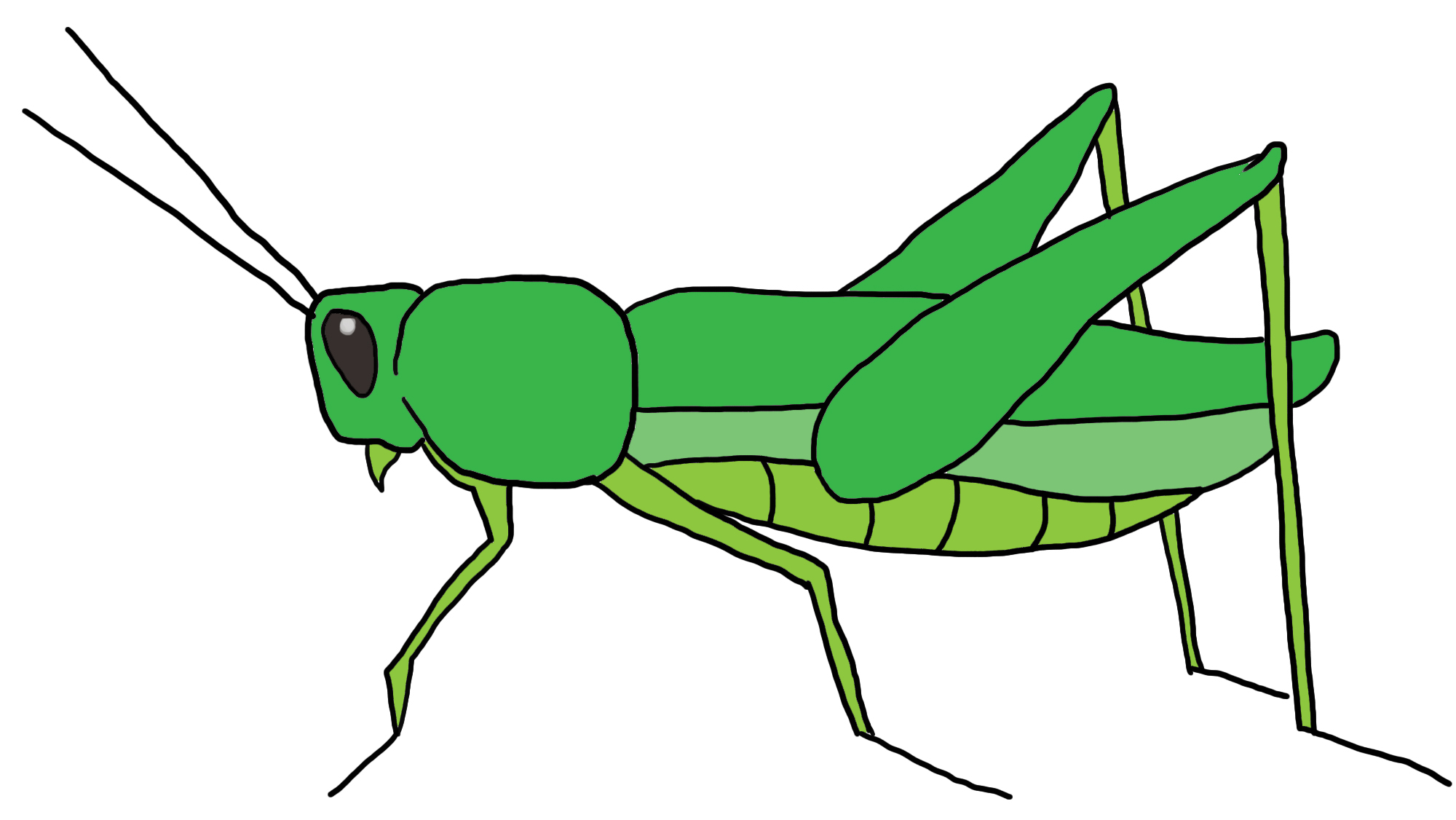 Grasshopper Drawing For Kids | Clipart Panda - Free Clipart Images