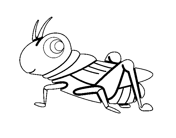 Grasshopper Drawing  Clipart Panda  Free Clipart Images