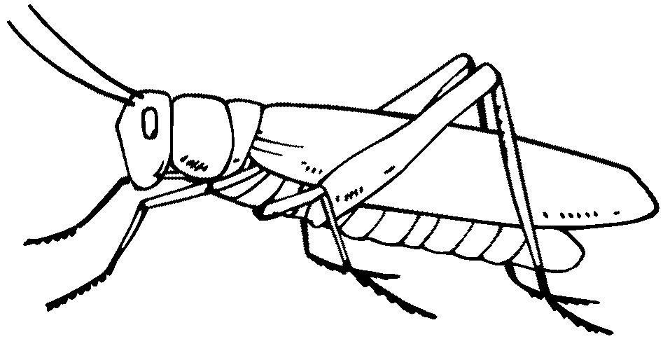 Grasshopper Drawing Outline